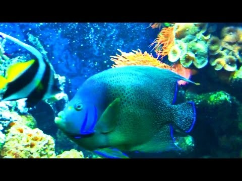 Aquarium Fishes for Kids
