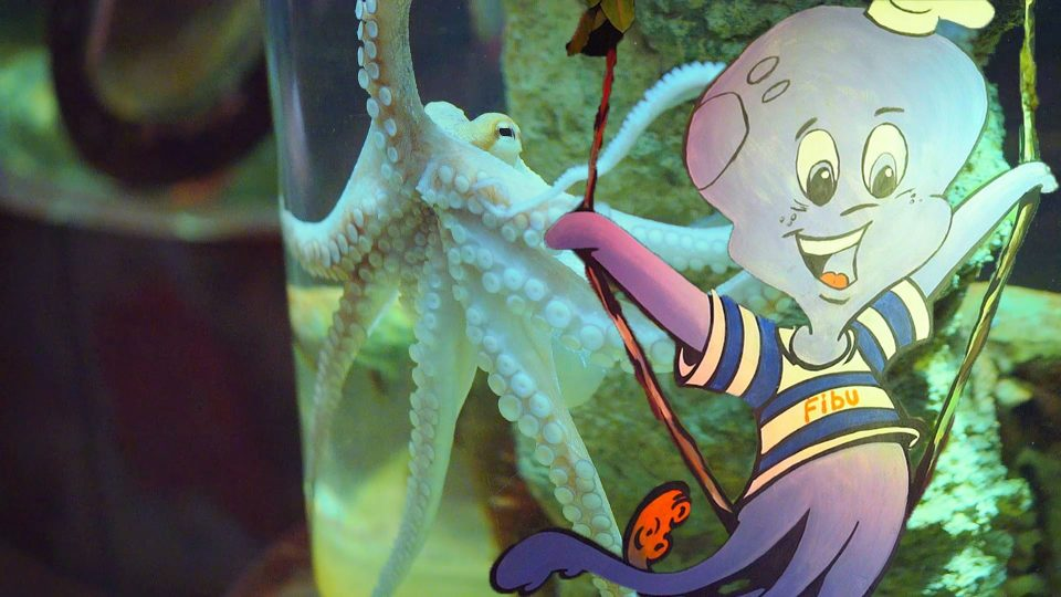 Little Hulk in Marine Zoo for Kids and met with smart Octopus